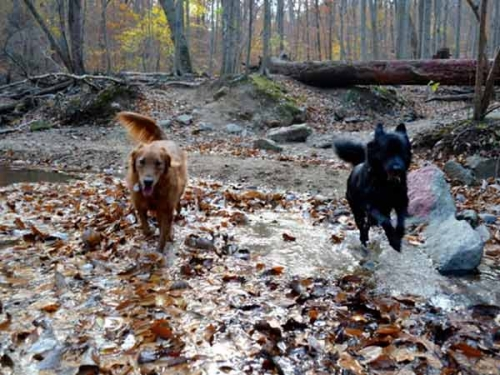Pet Sitting And Dog Walking Free Online Course