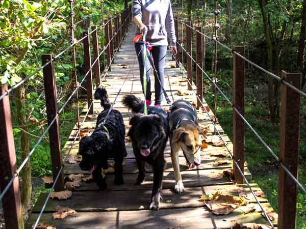 Off The Beaten Path Dog Services